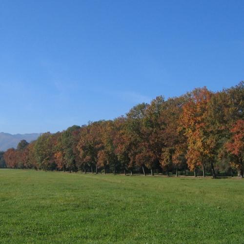 Parco La Mandria. Viale dei Roveri