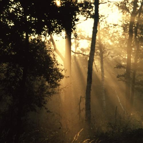 Parco La Mandria. Il bosco