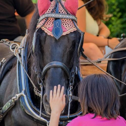 I cavalli della carrozza. Foto di Arianna Parola