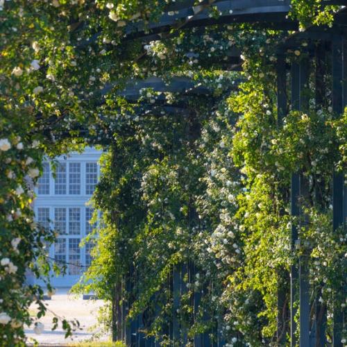 Giardino delle Rose - Foto di Dario Fusaro