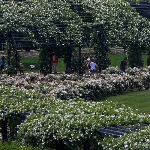 Il Giardino delle Rose della Reggia di Venaria
