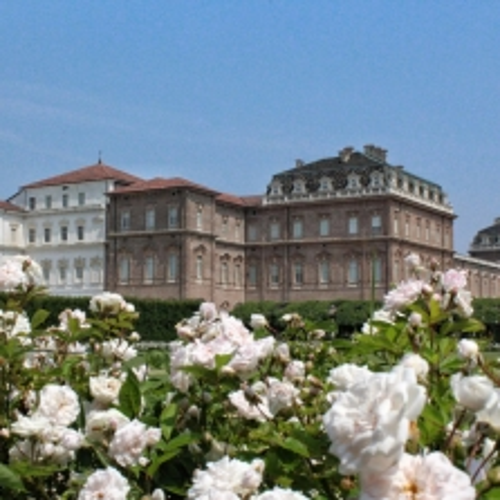 Le rose bianche nel Giardino delle Rose della Reggia di Venaria