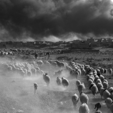 People flee ISIS controlled areas carrying with them their possesions and in the case of farmers their sheep.  Over the summer, in an effort to prevent coalition airstrikes, ISIS fighters set alight oil fields around Qayyarah, a city southeast of Mosul. The fires have been sending noxious black smoke into the atmosphere ever since. ©Paolo Pellegrin/Magnum Photos