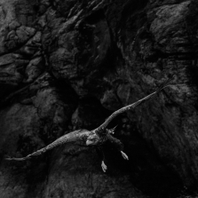 A sea eagle, the largest bird of prey in Norway, in the fjords of the Flatanger archipelago. Lauvsnes, Norway, 2019. ©Paolo Pellegrin/Magnum Photos
